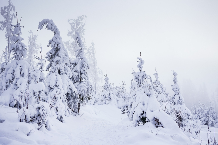 mountain-forest-trail-under-heavy-snow-picjumbo-com
